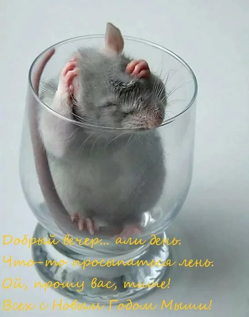 Mouse.thumb.jpg.3056b274daf30d107f7ac06125608f70.jpg